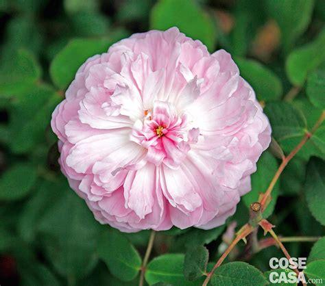 maggio fiori fiori mese di maggio fabulous fiori piante with fiori