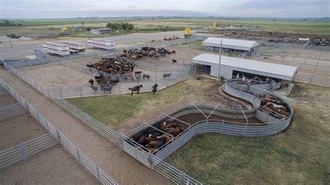 las fotos m 225 s de corrales en instagram 24 01 los corrales de expoagro contar 193 n con instalaciones para el bienestar animal expoagro
