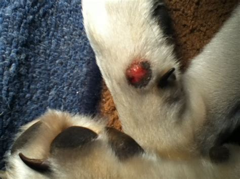 how to a that bites how to treat mosquito bites on dogs mosquito bite remedies