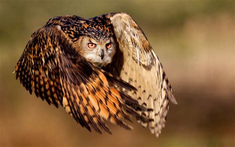 Burung Hantu Owl Ukiran Kayu 1 Set 3 Pcs Asli Handmade animalz owl new photos 2014