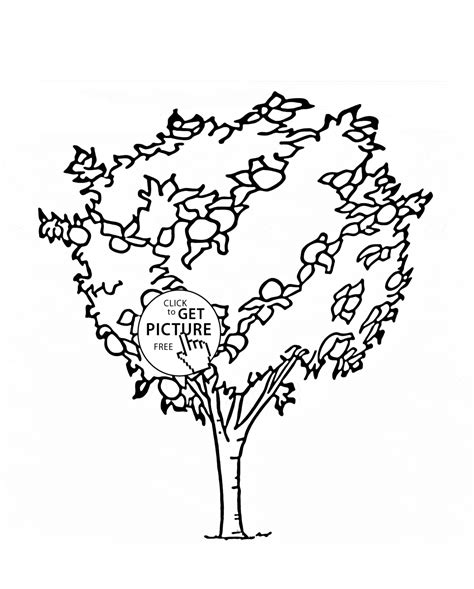 coloring page tree with fruit orange tree fruit coloring page for kids fruits coloring
