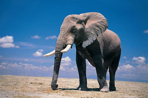 cool elephant wallpaper quality cool elephant wallpapers animal pinterest