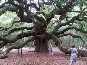 Chandelier Tree Leggett Famous Trees A Gallery On Flickr
