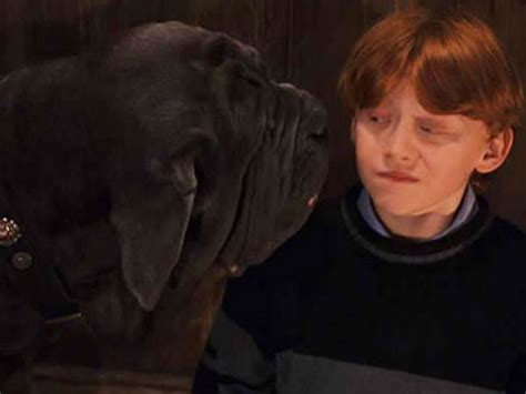 hagrid s dogs name the 10 best names from the quot harry potter quot universe