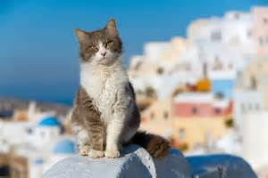 aegean cats the protagonists of tourist photos protothemanews com