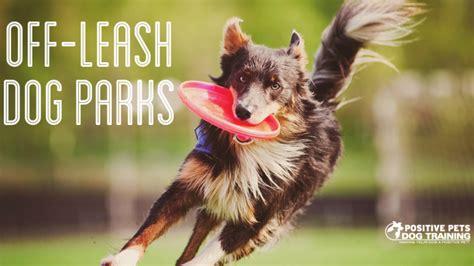 puppies boise a blast at these leash parks boise positive pets