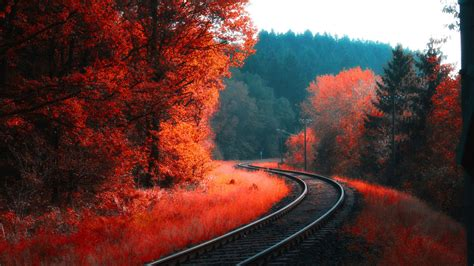 railway  red blossom autumn forest  hd nature