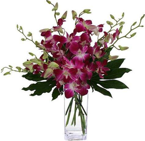 wallpaper bunga asli ternyata bunga anggrek adalah spesies terbesar dari