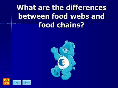 what s the difference between a lanai a patio a porch and a food webs food chain