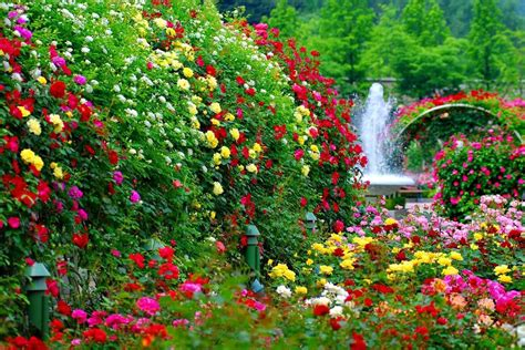 beautiful garden flowers wallpaper hd wallpapers