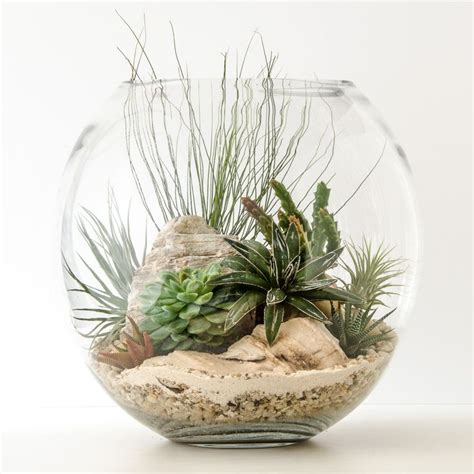 air plants terrariums www pixshark com images galleries with a bite