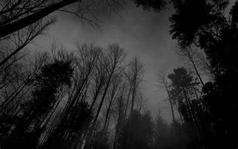black and white pictures anime forest 9 cool hd wallpaper hdblackwallpaper com