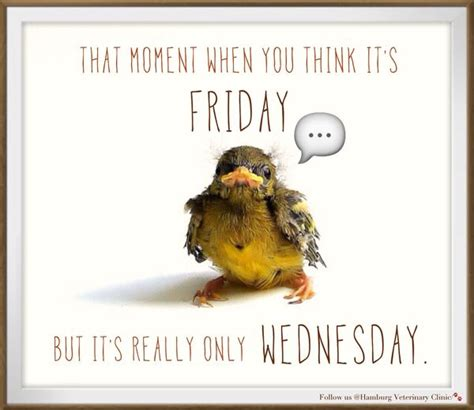 Funny Memes About Wednesday - wednesday funny images memes quotesbae