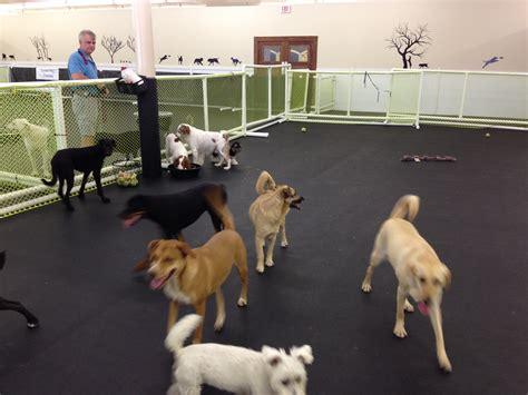puppy day care day care jacksonville fl happy hound resorts
