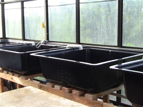 grow bed aquaponics easy reach grow bed