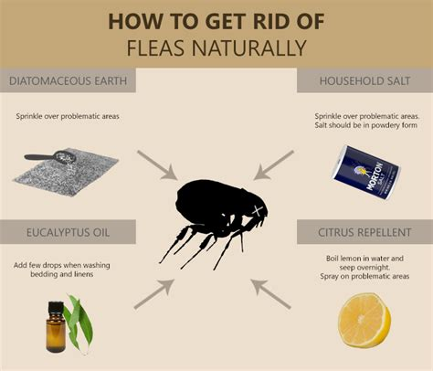 how to get rid of fleas on 6 remedies to get rid of fleas instantly at home