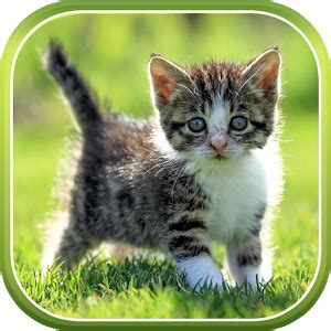cat  wallpaper android apps  google play