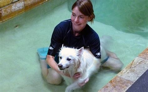 water therapy for dogs how does water therapy for dogs work fido universe