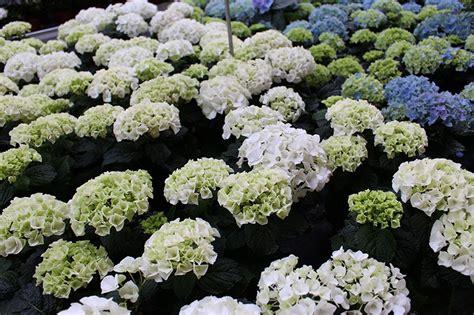 pflegeleichte pflanzen für den garten snofab haus einrichten ideen