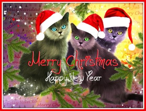 christmas cats cats animals background wallpapers  desktop nexus image