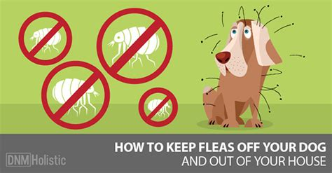Http Www Dogsnaturallymagazine How To Detox Your by Our Best Home Remedies For Fleas