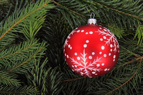 tree baubles bauble on tree branches free stock photo