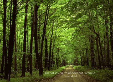 Of The Rainforest Essay by Essay Importance Of Forest For Students And Children Essayspeechwala