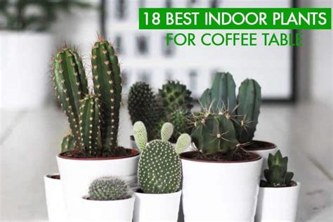 easiest indoor plants 18 best indoor plants for coffee table gardenoid