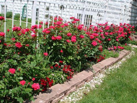 Landscape Ideas Using Knockout Roses Knockout Garden Ideas Photograph Knockout Garden