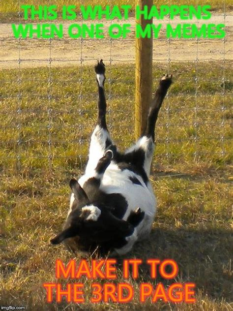 Fainting Meme - fainting goat imgflip