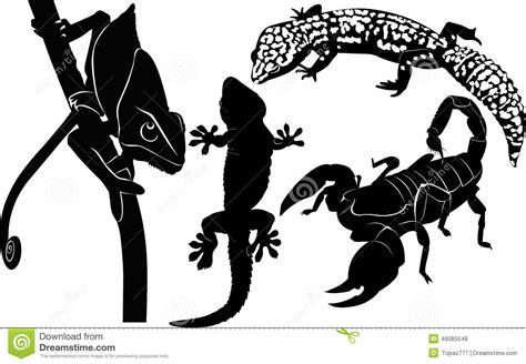 scorpion gecko chameleon stock vector image 46085548