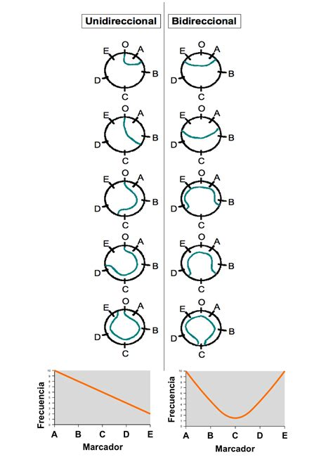 cadena de adn de 15 nucleotidos replicaci 243 n de adn