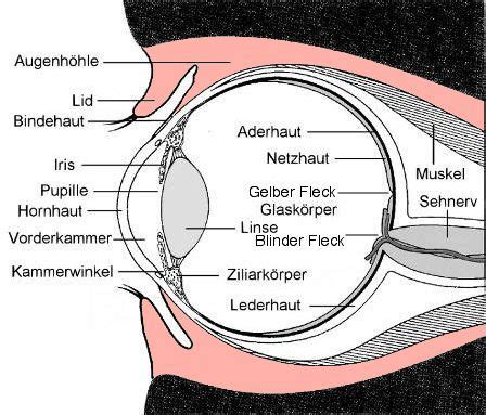 Beschriftung Des Auges by Glaubt Ihr An Geister Seite 2 Sinnfrei Gsf