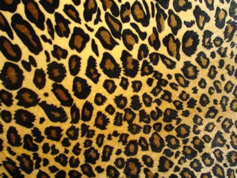 Animal Print prints patterns animal print fashion animal prints
