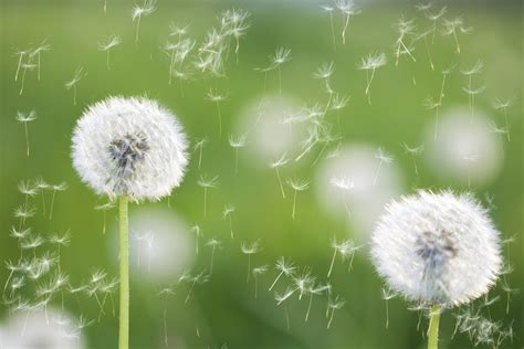 how to help allergies how to tell if it s active directory integration or just seasonal allergies