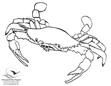 blue crab coloring page blue crab colouring pages