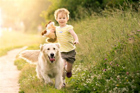 golden retrievers and children why golden retrievers make the best teachers companions for golden