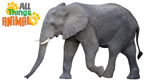 Elephant For Children elephants animals for children kindergarten