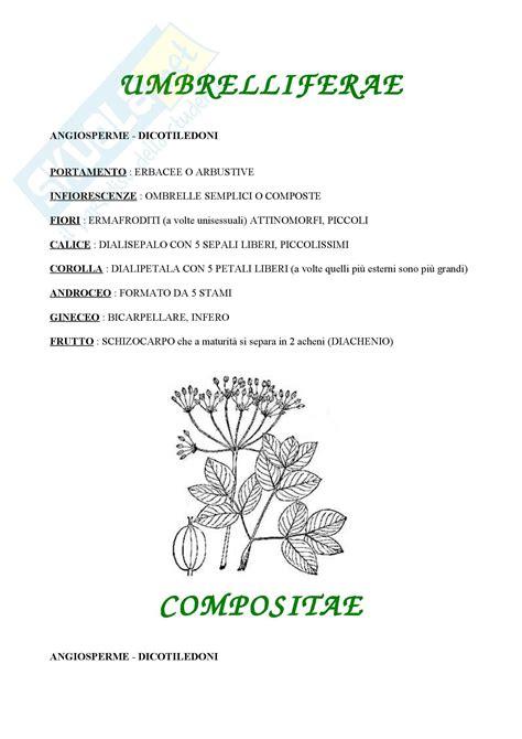 fiore angiosperme botanica le angiosperme