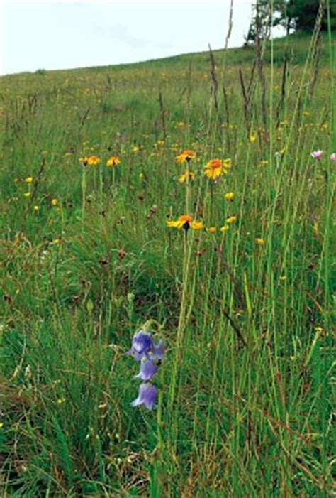 habitat ufficio trento habitat 6230 rete natura 2000 le aree protette