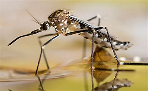 Mosquitoes In Backyard by Keep Your Yard Mosquito Free