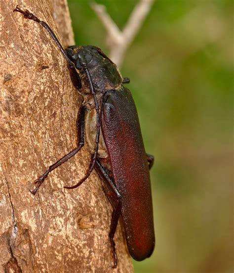 beetles eat