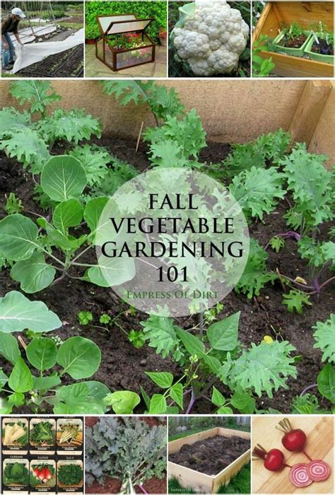Winter Vegetable Garden Fall Vegetable Gardening 101 Gardens Cold