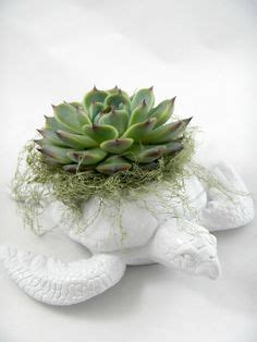 succulent garden turtle planter contemporary plants by zulily 1000 images about garden planters on pinterest mccoy
