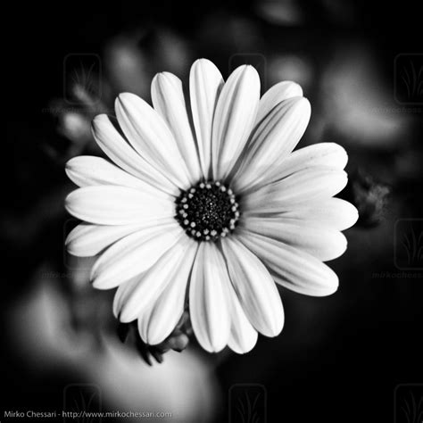 foto in come trasformare una foto in bianco e nero mondo informatico