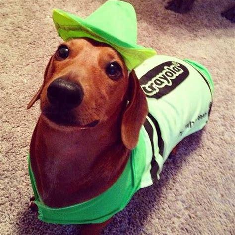 weiner costumes best 25 dachshund costume ideas on dachshund costumes weiner