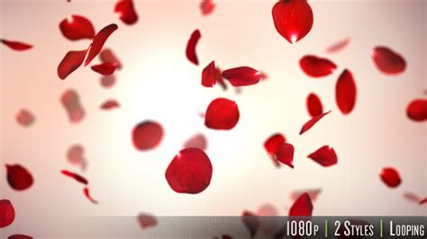 Falling Red Rose Petals Background By Butlerm Videohive Falling Flower Petals After Effects Template Free