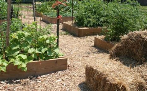 Summer Soil Mulch And Compost Tips University Of Vegetable Garden Maryland