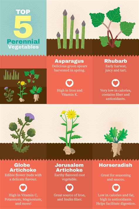 perennial garden vegetables planting perennials in the garden fix
