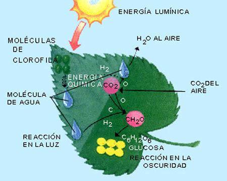 fotosintesis de las plantas schnieders blog fotosintesis de las plantas